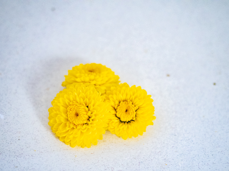 重陽の節句の菊花